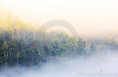 Foggy morning sunrise with mountain background