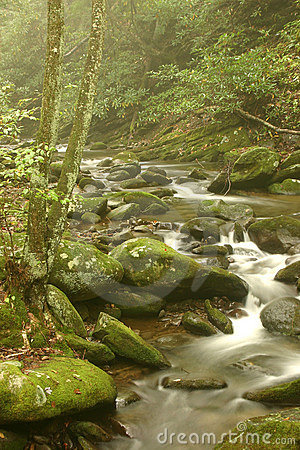 Foggy Mountain Stream