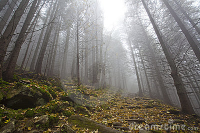 Foggy mystery forest with trees in fall