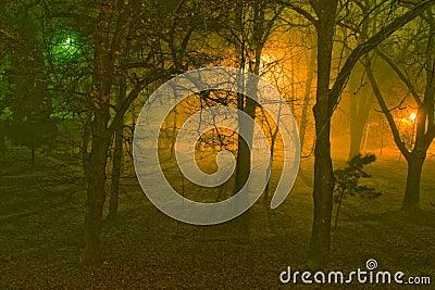 Foggy night in a park.