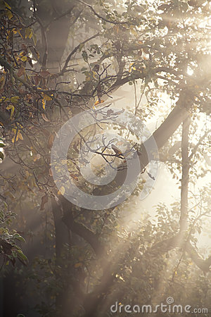 Free Foggy Orchard Stock Image - 27419381