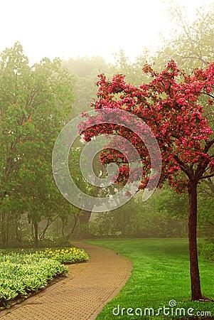 Free Foggy Park Royalty Free Stock Image - 2482436