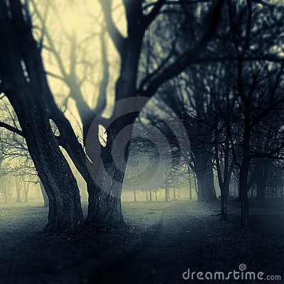 Free Foggy Park Path Stock Photography - 18897622