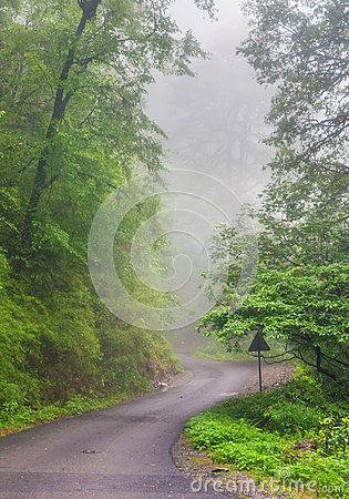 Foggy path
