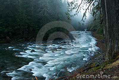 Foggy Scene on the Sol Duc River