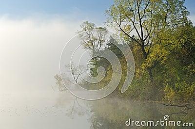 Foggy Spring Landscape