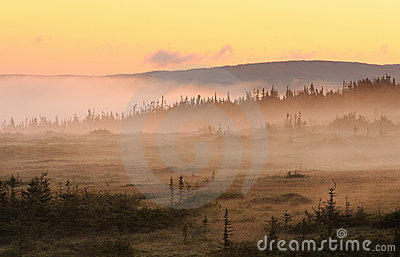 Foggy sunrise landscape