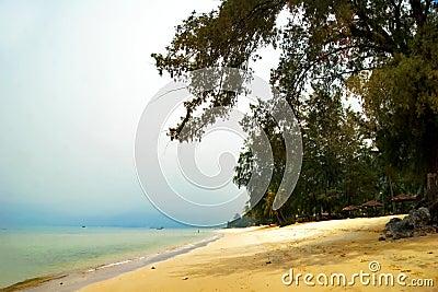 Foggy tropical beach.