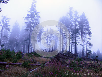 Foggy weather in forest