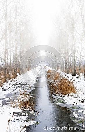 Foggy winter creek
