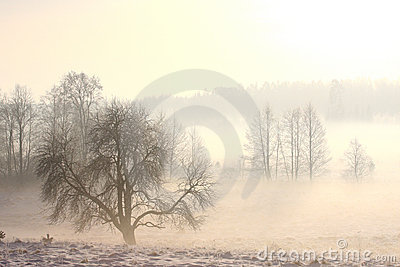 Foggy winter landscape in cold day