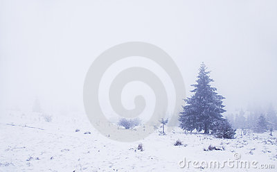 Foggy winter landscape with pinewood