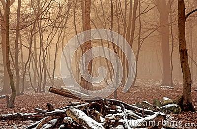 Foggy Winter Woodland
