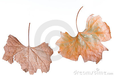 Fogli d autunno
