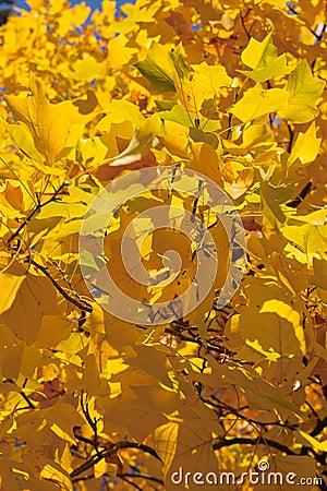 Fogli di autunno