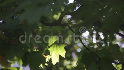 Foglie verdi alla luce solare radiante archivi video