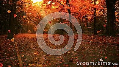 foglio digitale di caduta della priorità bassa di autunno di arte archivi video