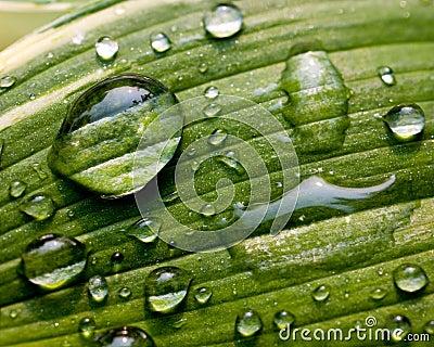 Foglio verde con le goccioline di acqua