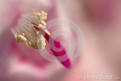 Fokus auf Blütenstaub