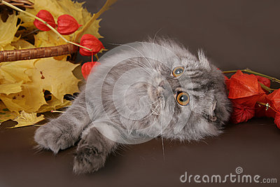 Fold in the autumn still life.