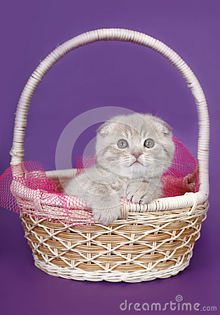 Fold kitten in a basket.