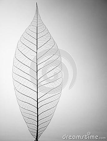 Folha de esqueleto decorativa