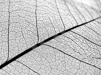 A folha do close up veia a textura
