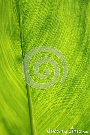 Folha verde como o fundo