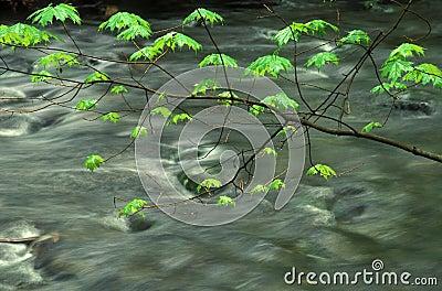 Folhas da mola