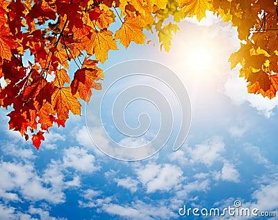 Folhas do amarelo do outono em raias do sol