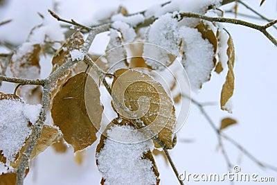 Folhas do inverno