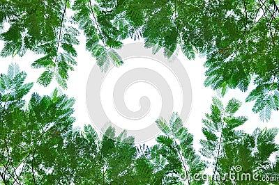 Folhas verdes isoladas no branco