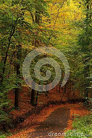 Folhas vermelhas do amarelo da estrada