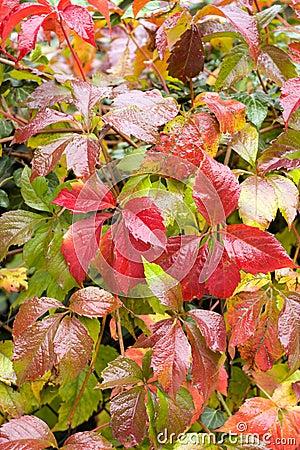 Foliage in autumn