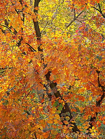 Foliage in fall colors