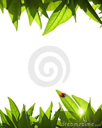 Free Foliage Frame Royalty Free Stock Photography - 2319267