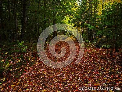 Foliage in quebec