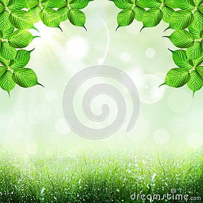 Foliage shape