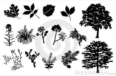 Foliage Silhouette Set