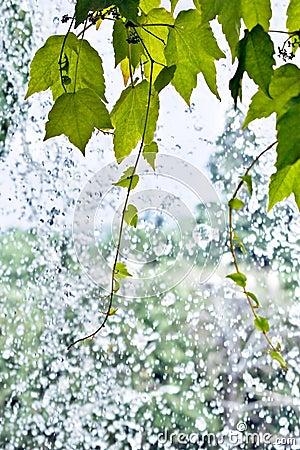 Foliage on a waterfall