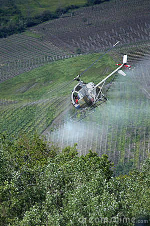 Following the spraying helicopter