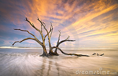 Folly Beach Dead Tree Driftwood Ocean Sunset