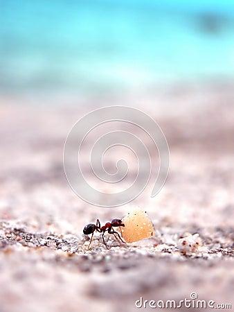 Fonctionnement de fourmi