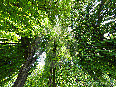 Fond d arbres