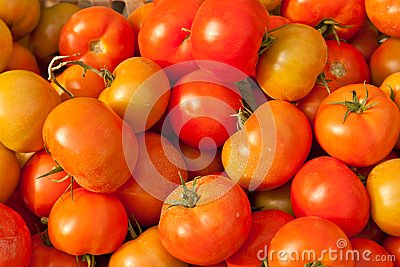 Fond des tomates fraîches à vendre