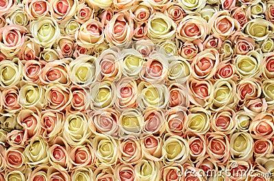 Fond rose et blanc de roses.