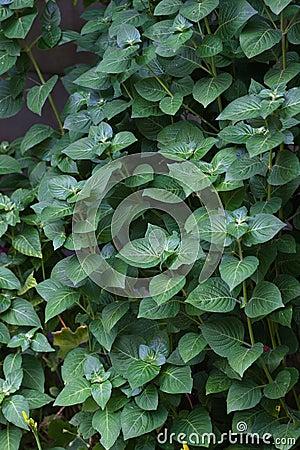 Fond vert feuillu