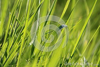 fond vert jaune riche d 39 herbe photographie stock image 32089902. Black Bedroom Furniture Sets. Home Design Ideas