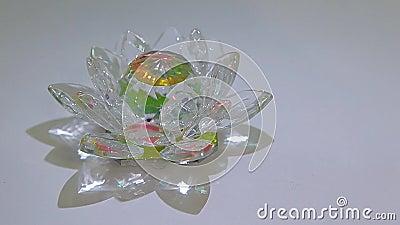 Fondo blanco de cristal de la flor de loto nadie cantidad del hd almacen de metraje de vídeo