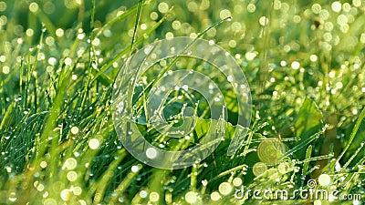 Fondo borroso de la hierba verde con los descensos del agua y cierre del rocío de la mañana encima de la visión almacen de metraje de vídeo